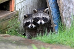 Avoid Contact with Wildlife to Prevent Exposure to Rabies